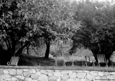 Chairs Under Olive Trees